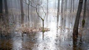 Das Frühlingsholz überschwemmte mit Wasser und das unter Eis eingefroren ist stock video footage