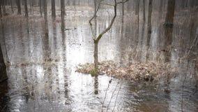 Das Frühlingsholz überschwemmte mit Wasser und das unter Eis eingefroren ist stock footage