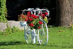 Das frisch wieder hergestellte und gemalte weiße alte Fahrrad, das jetzt als Gartendekoration mit hängenden Begonien- und Petunie lizenzfreies stockfoto