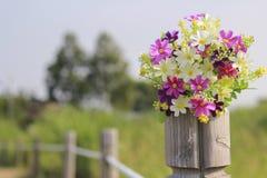 Das Gänseblümchen ist auf dem alten Holz im Garten Stockbild