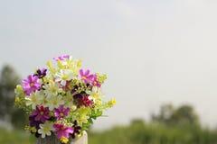 Das Gänseblümchen ist auf dem alten Holz im Garten Stockfoto