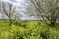 Das Galiläa im Frühjahr lizenzfreie stockfotografie