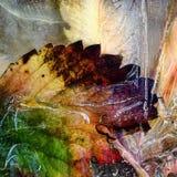 Das gefrorene Blatt eines Ahorns 1 Stockfotografie