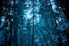 Das gefrorene Forrest lizenzfreies stockfoto