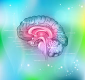 Das Gehirn Lizenzfreies Stockfoto