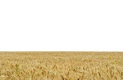 Das gelbe Feld des Weizens Stockfotografie