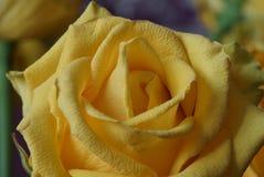 Das Gelbe stieg Blumenstrauß Makro Stockbilder