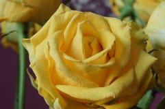 Das Gelbe stieg Blumenstrauß Makro Lizenzfreies Stockfoto