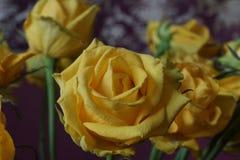 Das Gelbe stieg Blumenstrauß Makro Lizenzfreies Stockbild