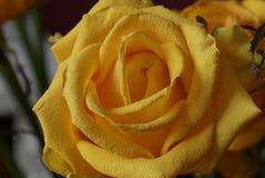 Das Gelbe stieg Blumenstrauß Makro Stockfoto