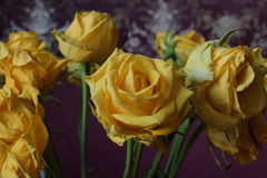 Das Gelbe stieg Blumenstrauß Makro Lizenzfreie Stockbilder
