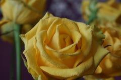 Das Gelbe stieg Blumenstrauß Makro Stockfotografie