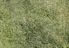 Das gemähte Gras eines Stadtrasens Lizenzfreie Stockbilder
