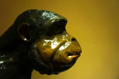 Das Gesicht des Affen Lizenzfreies Stockbild