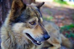 Das Gesicht des Hundes Lizenzfreies Stockbild