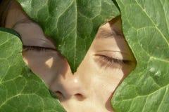Das Gesicht von Winkelschlafenwann umfasst durch grüne Blätter stockfotos