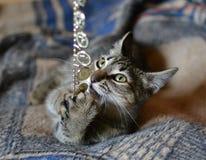 Das gestreifte Katzenspielen Lizenzfreie Stockfotos