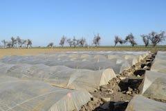 Das Gewächshaus für wachsendes Gemüse in den Gewächshäusern Lizenzfreies Stockfoto