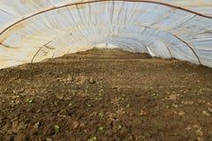 Das Gewächshaus für wachsendes Gemüse in den Gewächshäusern Lizenzfreies Stockbild