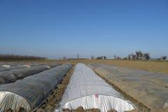 Das Gewächshaus für wachsendes Gemüse in den Gewächshäusern Lizenzfreie Stockfotos