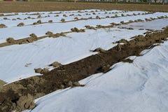 Das Gewächshaus für wachsendes Gemüse in den Gewächshäusern Stockfoto