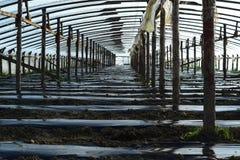 Das Gewächshaus für wachsendes Gemüse in den Gewächshäusern Stockbilder