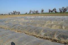 Das Gewächshaus für wachsendes Gemüse in den Gewächshäusern Stockfotografie