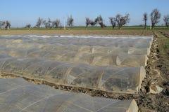 Das Gewächshaus für wachsendes Gemüse in den Gewächshäusern Lizenzfreie Stockbilder