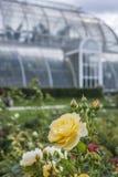 Das Gewächshaus und die Rosen Stockfotos