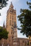 Das Giralda von Sevilla zwischen Orangenbäumen. Spanien Lizenzfreies Stockfoto