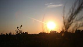Das Gold der untergehenden Sonne stock video