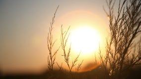 Das Gold der untergehenden Sonne stock video footage