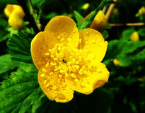 Das Goldene Blumen Lizenzfreies Stockfoto