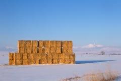 Das goldene Heu, das auf einem Gebiet mit Schnee gestapelt wurde, bedeckte Berge in mit einer Kappe stockfoto