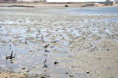 Das Golf von Aden Stockbilder