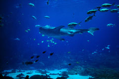 Das größte Aquarium der Welt in Atlanta Georgia USA Stockbilder