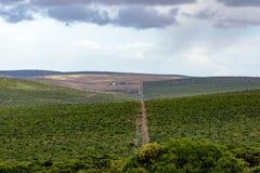 Das Grün - Addo Landscape Lizenzfreie Stockfotografie
