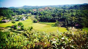 Das Grün der Natur Stockfoto