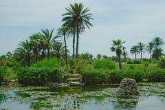 Das Grün des Sommers verschönern landschaftlich. Stockfotos
