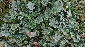 Das Grün und trocknen etwas Blätter werden bedeckt mit einer Schicht Schaum Gras im Frost lizenzfreie stockfotografie