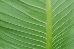 Das grüne Blatt Lizenzfreies Stockbild