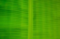 Das grüne Blatt Stockfoto