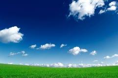 Das grüne Feld Lizenzfreie Stockbilder