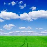 Das grüne Feld Stockfotografie