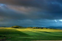 Das grüne Feld Stockfotos