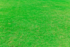 Das grüne Gras Stockfotografie