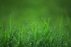 Das grüne Gras 3 Lizenzfreies Stockbild