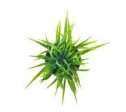 Das grüne Gras Lizenzfreies Stockbild