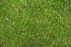 Das grüne Gras Lizenzfreie Stockfotografie