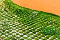 Das grüne Gras, das in den Löchern des Steins heranwächst, blockiert Gehweg im Sommerpark Hintergrundpflasterklinkerboden im Gart Lizenzfreies Stockfoto